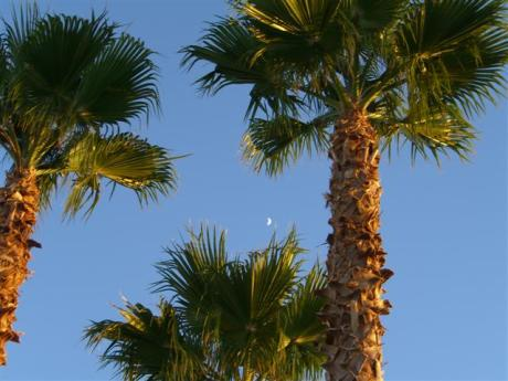palms-and-moon-005-small.jpg