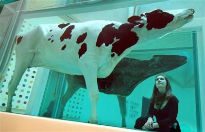 071213-damien-hirst-cow-hmed-10ahmedium.jpg