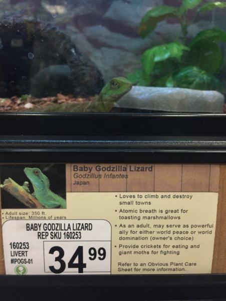 pet-store1