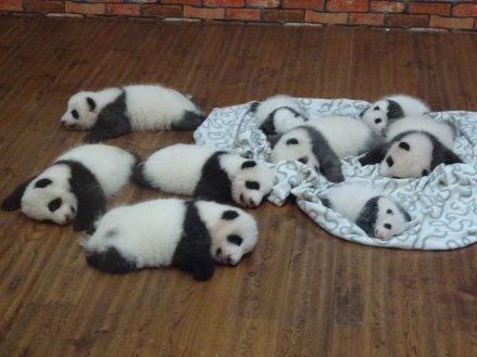 pandafarm