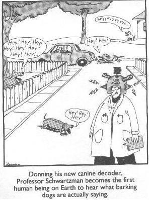 dog-translator
