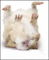 dead_hamster